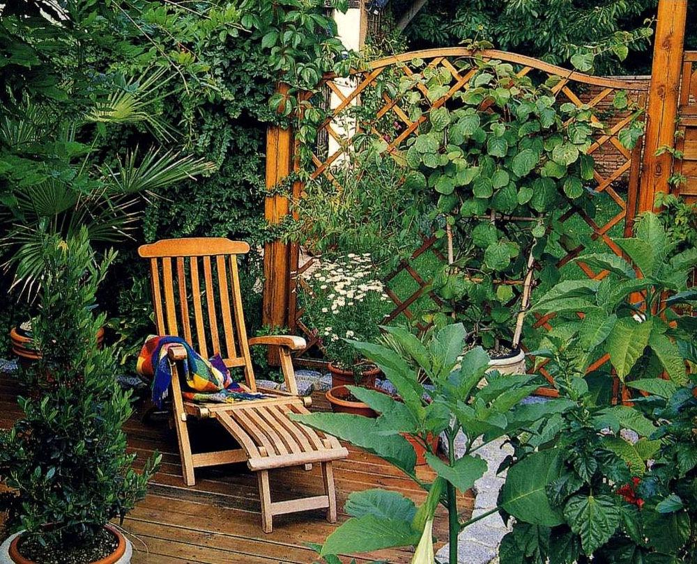 Быстрорастущая живая изгородь на даче своими руками какие растения фото 45